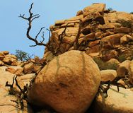 Joshua Tree Rock Formation Fotografia Stock