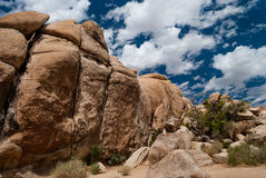 Joshua Tree Rock Formation Foto de archivo