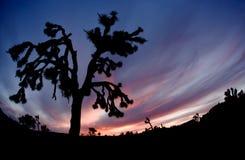 Joshua Tree Silhouette Stock Images