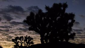 Joshua Tree Sunrise Tilt stock footage