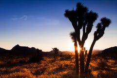 Joshua Tree Sunset Imagenes de archivo
