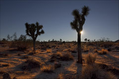 Joshua Tree Sunset Fotografia Stock