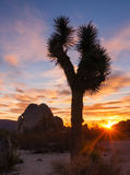 Joshua Tree Sunset Cloud Landscape California National Park Stock Photo