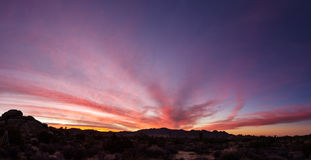 Joshua Tree Sunset Panorama Stock Photos