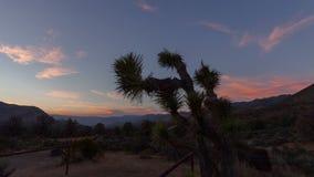 Joshua Tree Sunset stock video footage