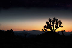 Joshua Tree Under The Stars. Joshua Trees in the mohave desert at twilight as the stars appear royalty free stock photos
