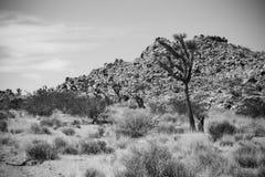 Joshua Tree Valley Stock Photo