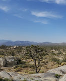 Joshua Tree in Woestijnlandschap stock afbeelding