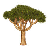 Joshua Tree , yucca tree, Joshua Tree. 3d illustration isolated on the white background vector illustration