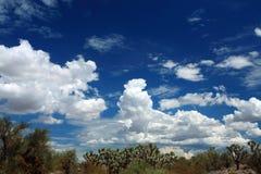Joshua trees. Against blue sky stock image