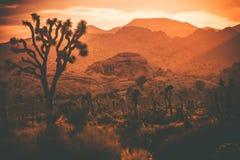 Joshua Trees California Desert Royalty-vrije Stock Fotografie