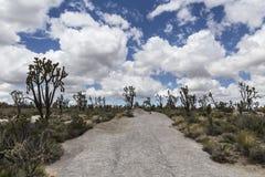 Joshua Trees dans la conserve nationale de Mojave images libres de droits