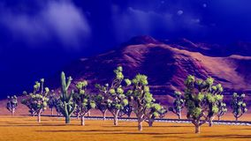 Joshua trees on desert Royalty Free Stock Images