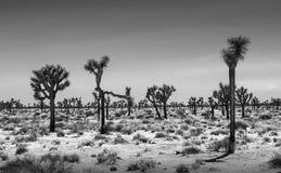 Joshua Trees Desert Landscape royalty-vrije stock foto's