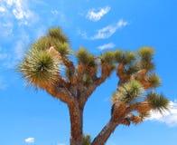 Joshua Trees en el desierto de California fotos de archivo