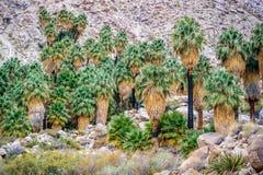 Joshua Trees en Joshua Tree National Park Photographie stock