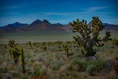 Joshua Trees Nevada Imagenes de archivo