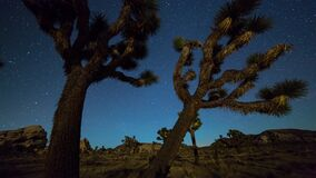 Joshua trees night timelapse. Joshua Trees night 4k 3d moving timelapse. Joshua Tree National Park, California stock video
