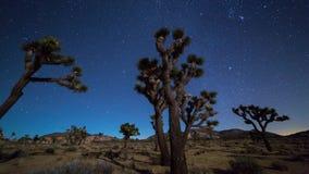 Joshua trees night timelapse. Joshua Trees night 4k 3d moving timelapse. Joshua Tree National Park, California stock video footage