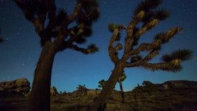 Joshua trees night timelapse. Joshua Trees night 4k 3d moving timelapse. Joshua Tree National Park, California stock footage