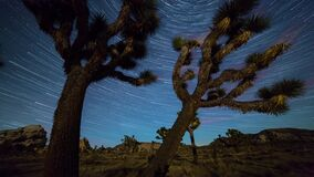 Joshua trees night timelapse. Joshua Trees night 4k 3d moving timelapse with star tracks. Joshua Tree National Park, California stock footage