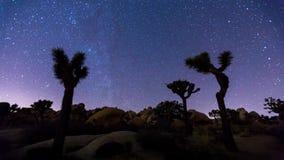 Joshua trees night timelapse. Joshua Trees night 4k timelapse, Joshua Tree National Park, California stock footage