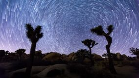 Joshua trees night timelapse