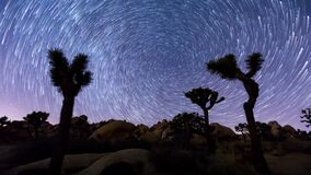 Joshua trees night timelapse. Joshua Trees night 4k timelapse with star trails and zoom in effect, Joshua Tree National Park, California stock video
