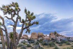 Joshua Trees och vaggar bildande - Joshua Tree National Park, Ca Arkivbilder
