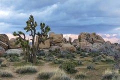 Joshua Trees och vaggar bildande - Joshua Tree National Park, Ca Royaltyfri Bild
