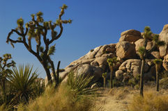 Joshua Trees & Rock Formations Stock Photo