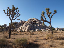 Joshua Trees and Rocks Stock Photography