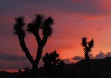 Joshua Trees Silhouetted no por do sol, Joshua Tree National Park, Califórnia fotografia de stock