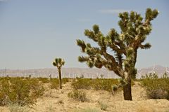 Joshua Trees and Turbines Royalty Free Stock Photography