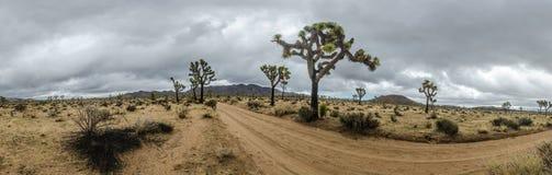 Joshua Trees y camino de tierra en panorama del día tempestuoso Fotos de archivo libres de regalías