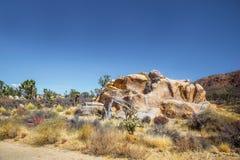 Joshuabomen in het Nationale Park van Mojave in Nevada Stock Afbeeldingen