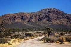 Joshuabomen in het Nationale Park van Mojave in Nevada Royalty-vrije Stock Afbeeldingen