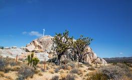 Joshuabomen in het Nationale Park van Mojave in Nevada Stock Foto