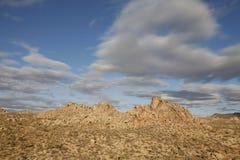 Joshue Tree Desert Landcape Royalty Free Stock Photo