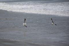 Jouer au-dessus de la mer Photos libres de droits
