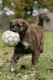 Jouer au football Images libres de droits