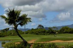 Jouer au golf avec les oies de Nene Photographie stock