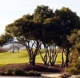 Jouer au golf d'après-midi Photographie stock libre de droits