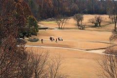 Jouer au golf de l'hiver photos libres de droits