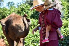 Jouer avec des éléphants de petit animal en parc de délivrance d'éléphant Image libre de droits
