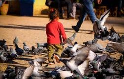 Jouer avec des oiseaux Photo stock