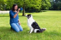 Jouer avec son chien photo stock