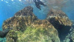 Jouer d'otaries sous-marin clips vidéos