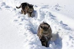 Jouer dans la neige donne le plaisir Photographie stock