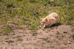 Jouer de chat Image libre de droits